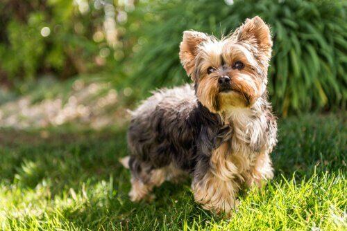 Alerji Yapmayan 5 Köpek Irkı