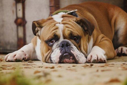 Köpeklerin Sevmediği 7 Davranış