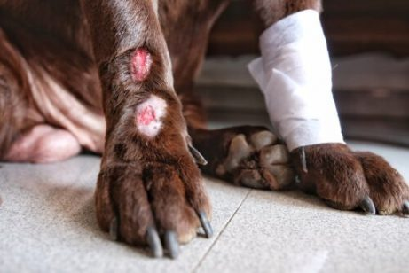 akral yalama dermatitisi