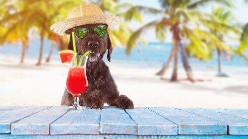 yaz aylarında köpek beslenmesi