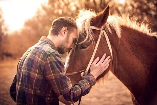 Atınız Sizi Seviyor mu?