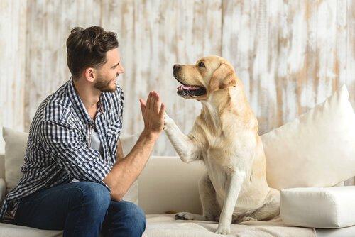 Hayvan Sahiplenmenin Bekar İnsanlar için Yararları