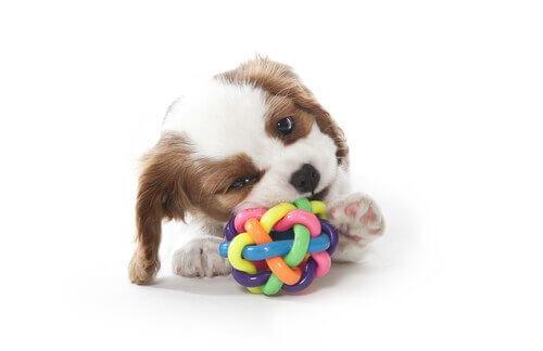 Köpeğiniz için Çiğneme Oyuncağı