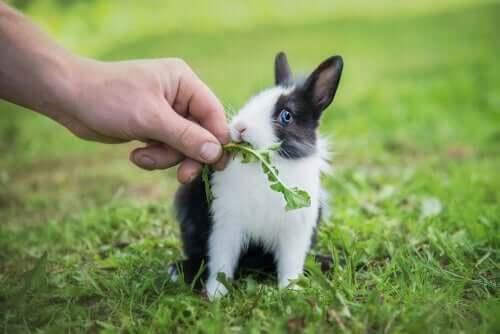 çimlerde tavşan