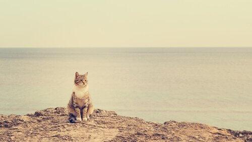 deniz manzarasında duran kedi