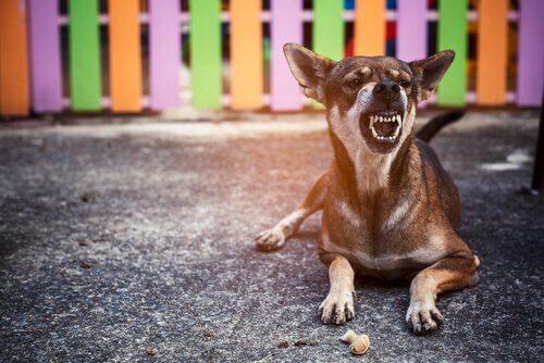hırlayan köpek