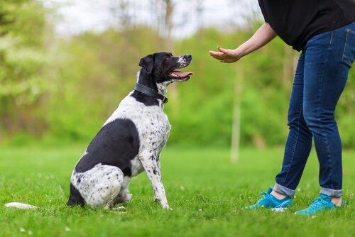 Köpek Eğitiminde Uygulamalı Psikoloji