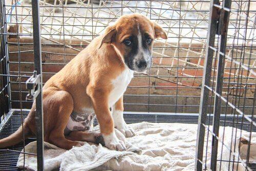 terk edilmiş yavru köpek