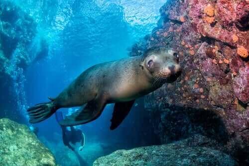 fok en iyi yüzücü