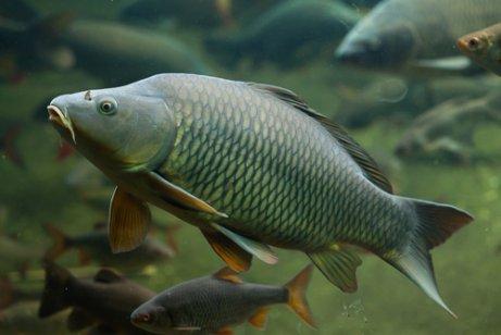 havuzda yüzen yeşil balık