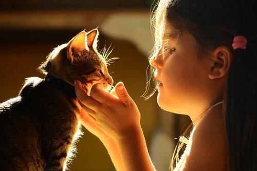 kediler ve hayvan telepatisi
