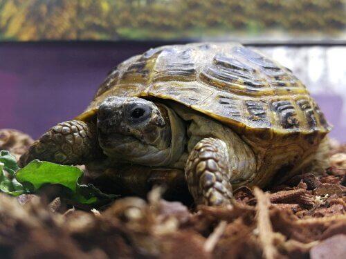 Kaplumbağalar için Teraryum Yapımı