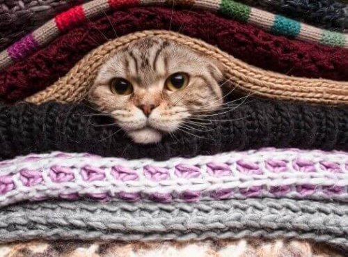 kafasını battaniyelerin arasından çıkaran kediler soğuktan hoşlanmaz