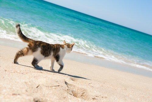 Kediler için plaj var mıdır?