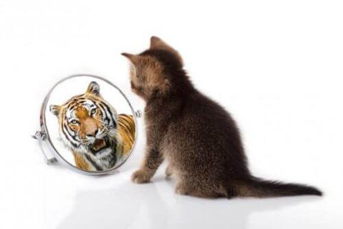 Kediler ve Kaplanlar Arasındaki Benzerlikler