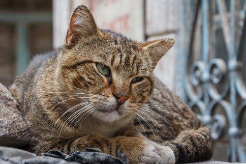kedilerde yaşlılık bunaması