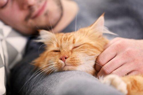 kedisine sarılıp uyumuş adam