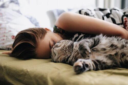Kedinizle Yan Yana Uyumak İçin Tavsiyeler