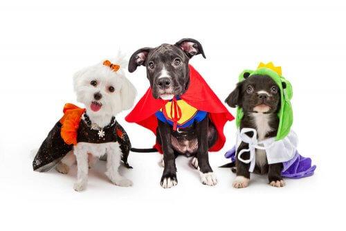 süper kahraman kıyafeti giyen köpekler