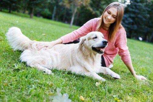 Köpek Eğitiminde Sakinleştirici İşaretler