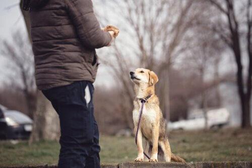 Köpek Psikolojisi: Bilmeniz Gerekenler