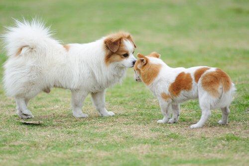 Köpek Selamlaması: Bilmeniz Gereken Her Şey