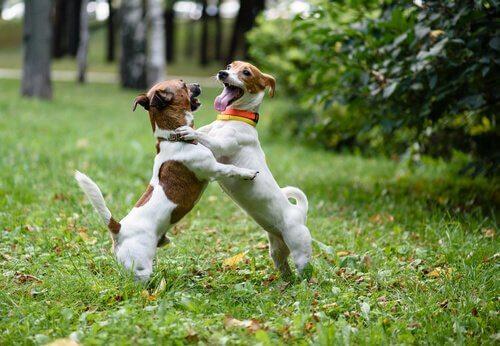 parkta köpek selamlaması