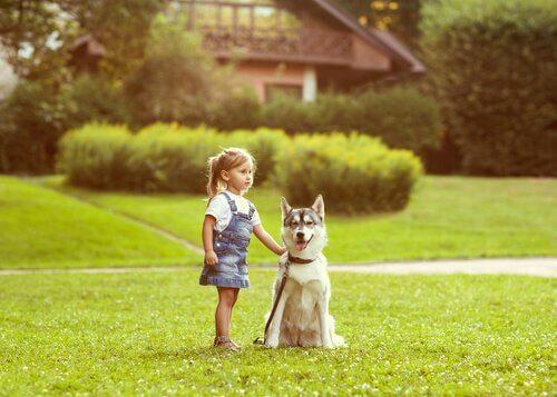 Köpeklerde Yön Bulma Duygusu