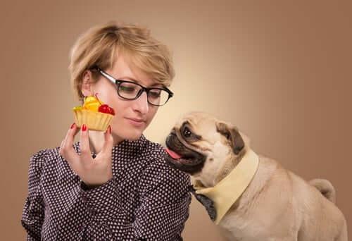 sahibinden tatlı isteyen köpek