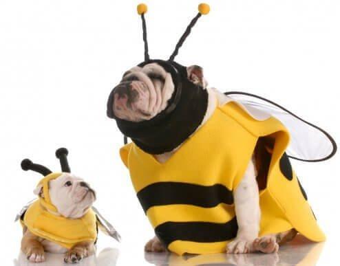 Köpek Kıyafeti Alacak Olanlara Tavsiyeler