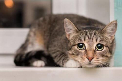 Kedileri Korkutan Şeyler Nelerdir?