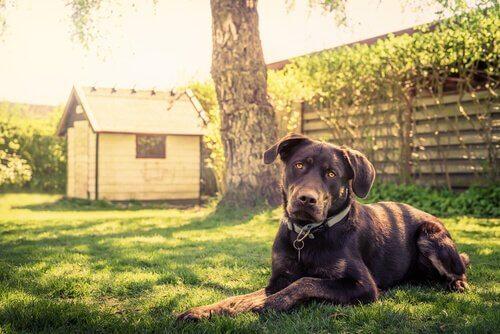 Köpek Kulübesi İnşa Etmek için 14 İpucu