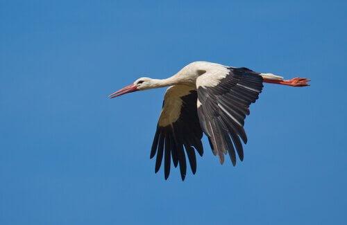 havada süzülen kuş
