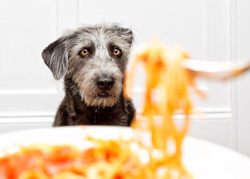 Köpekler Makarna Yiyebilir Mi?