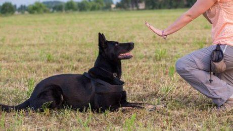 köpeğe otur komutu veren kadın