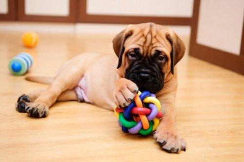 Neden Köpeğinizle Oyun Oynamalısınız?