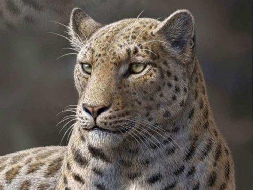 Nesli Tükenmiş 5 Vahşi Kedi Irkı