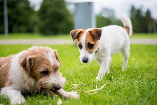 parkta iki köpek