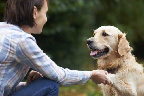 patisini uzatan köpek