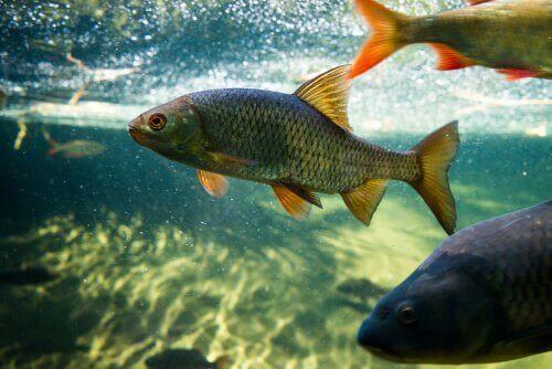 Tarla Balıkçılığı Hakkında Bilmeniz Gerekenler