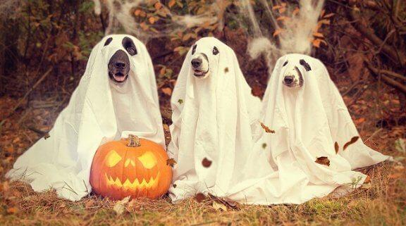 Köpeklerde Sonbahar Hastalıkları