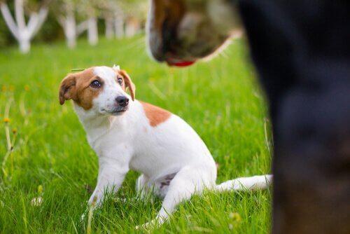 tellington ttouch yöntemiyle köpek sakinleştirme