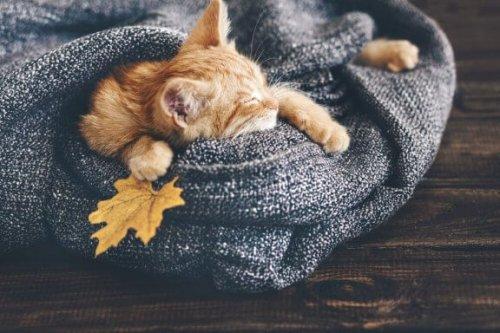 sarı kedi yatağında uyuyor
