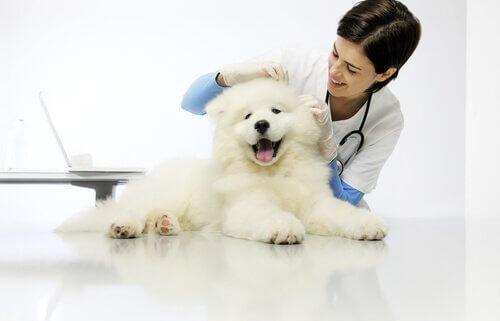 yaşam kalitesi için veteriner ziyareti
