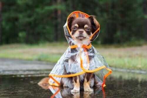 Köpeğinizi Soğuk Kış Havasından Nasıl Korursunuz