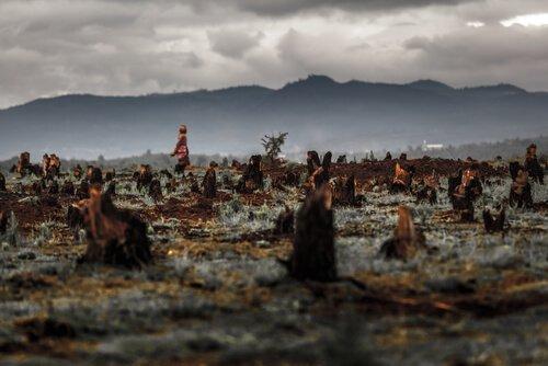 tahrip edilmiş orman