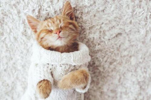 Neden Kediler Soğuktan Hoşlanmaz?