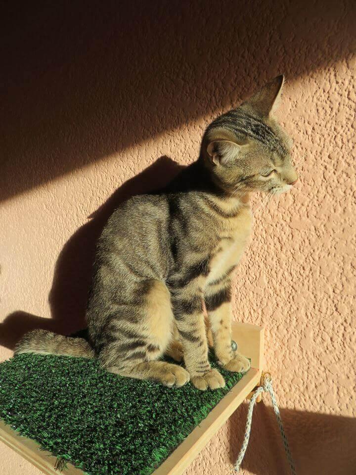 güneşte duran yavru kedi