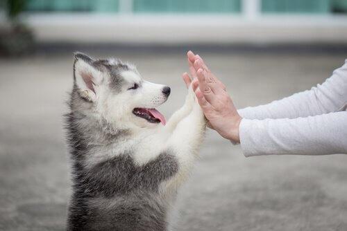sahibinin elini tutan köpek