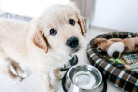 yavru köpek beslemek